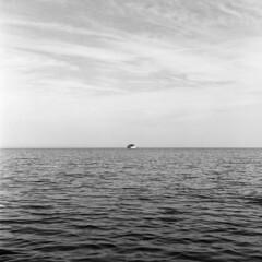 Last Day of Summer (scott_z28) Tags: statepark sea summer blackandwhite bw 120 6x6 tlr film beach water monochrome mi mono boat michigan 150 epson v600 minimalism 15minutes rodinal yashica tranquil baycity 635 tricities saginawbay
