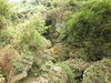 Guizhou China cave   2014龙里腰八洞1号洞口 (黔中秘境) Tags: china asia caves cave 中国 caving guizhou speleo cccp 贵州 大自然 山洞 亚洲 洞 洞穴 cavem 中国洞穴 贵州洞穴