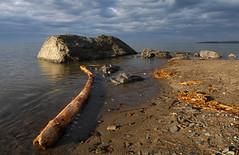Wood, rock and water (Natimages) Tags: wood tree beach water rock clouds pentax tide bluesky shore k7 da15mmltd