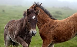 pony 04