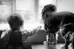 Best Buds On Guard Duty (James W Atkins) Tags: dog boy toddler child baby cavalierkingcharlesspaniel cavalier cavalierkingcharles kingcharlesspaniel kingcharlescavalier window windows light outside watching guarding guard blackwhite blackandwhite pup puppy love friends buddies buds mates watch looking look photoshoot