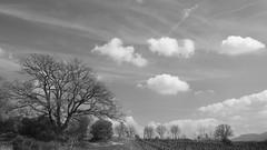 Sous le ciel de provence * (Titole) Tags: tree arbre clouds bw blackandwhite noiretblanc nb nicolefaton titole landscape vineyard