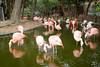 . (Wunkai) Tags: fukuokashi fukuokaken japan jp uminonakamichiseasidepark 海の中道海浜公園 動物の森 zoo 福岡 紅鶴 crane reflection 倒影 九州 kyushu