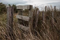 ºº FENCE Waiinu Beach ºº (m+m+t) Tags: dscf366212 mmt meredithbibersteindesign newzealand taranaki northisland waiinubeach coast beach water sea tussock sandhills fence wood wind gale fujixt1 fujixseries fujimirrorless 1855mm