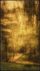 Fairy forest (yve_all) Tags: frühling spring trees bäume natur nature licht light colours farben landschaft landscape blickwinkel view mystisch mystic dreams träume märchenhaft fairy