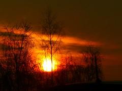 Trees under the sunset (JMHmagdalia) Tags: sunset sun tress