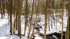 Stokes State Forest 3/21/17 (CurciosLandscapes) Tags: trailphoto winterhike winterscene creek optoutside hiking njhiking naturephotography lumixg7 panasonic stokesstateforest