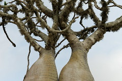 DSC07472_DxO_Bildgröße ändern (Jan Dunzweiler) Tags: madagaskar africanbikers reniale renialareserve jandunzweiler