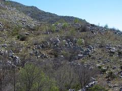 Mrcevo stone circle