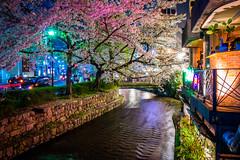 sakura '17 - cherry blossoms #5 (Kiyamachi, Kyoto) (Marser) Tags: xt10 fuji raw lightroom japan kyoto night nightview longexposure flower cherry sakura light 京都 木屋町 高瀬川 桜