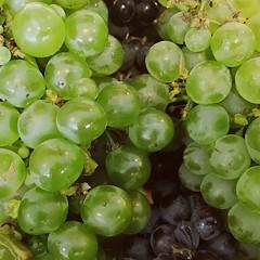 Fruit Of The Vine (Peter.Bartlett) Tags: grapes oakridgewinery victoria australia stilllife vsco iphone7 cellphone mobilephone square fruit