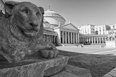 2017 03 03 - Napoli - (107) (Giovanni.Ciliberti) Tags: piazza del plebiscito chiesa san francesco di paola arte colonne cupola prospettiva bn bianco e nero felini leone primo piano