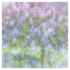 91/365 Spring in the Park (Jane Simmonds) Tags: iphone multipleexposure icm intentionalcameramovement pastel impressionistic trees spring blossom 91365 3652017 painterly