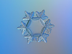 snowflake (chaoticmind75.blogspot.com (blog graphics)) Tags: snowflake real background nature photo snow flake abstract macro christmas unique detail frost microscopic crystal winter season natural seasonal closeup weather cold ice hexagonal symmetric structure light pattern shape symbol unusual rare detailed design fragile individuality symmetrical geometry symmetry glittering water close up single ornament transparent hexagon star chdk alexeykljatov chaoticmind75 снежинка