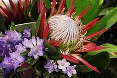 flowers (51)