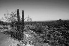 White Tank Mountain park (indykaleu) Tags: november arizona cactus blackandwhite bw plants phoenix rural canon landscape eos daylight sand rocks day desert sigma vegetation 2012 phoenixarizona 30d maricopa maricopacounty canoneos30d 1750mmf28 whitetankmountainpark sigma1750mmf28 indykaleu