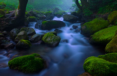 Water Motion (Yohsuke_NIKON_Japan) Tags: longexposure mountain plant tree green nature water beautiful rock forest river landscape flow moss nikon quiet relaxing clean fairy nano   tranquil tottori slowlife  daisen  d600  1635mm        minusions   negatyiveions