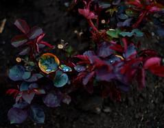 2е мая... (Alder Vas) Tags: makeevka макеевка пейзаж украина область донбасс донецкая маеевка