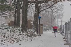 A Snowy Walk to the Library (Hopkins Rare Books, Manuscripts, & Archives) Tags: snow libraries jhu johnshopkinsuniversity