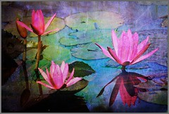 Lily Pond (ulli_p) Tags: blue light reflection green art texture nature water colors thailand pond asia southeastasia colours waterlily blossoms lilypads textured isan nympheaceae likeapainting aworkofart flickraward texturedphoto ruralthailand awardtree artofimages magicunicornverybest magicunicornmasterpiece exoticimage canoneoskissx5