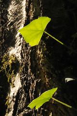 Foresta magica (illyphoto) Tags: wood foglie forest foglia albero foresta illyfoto photodiilariaprovenzi illyphoto photoilariaprovenzi magicaforesta