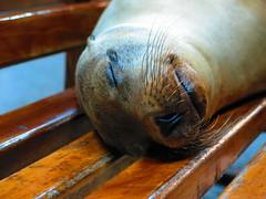 Durmiendo (R a f o s o) Tags: ecuador galapagos islas