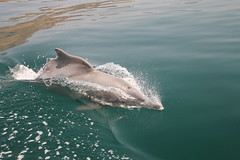 Musandam fjords cruise (JnyAroundTheWorld (#nophotoshop thanks for your co) Tags: landscape boat scenery dolphin fjord oman dhow birdlife cormoran musandam khasab jny arabfjorddolphinhumpback