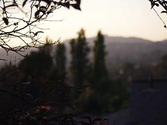 P7152079 (caligula1995) Tags: sunset sky plumtree balconygarden