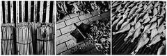 Industri Ikan Masin (Salty Fish Industry) (azri zainul) Tags: blackandwhite bw monochrome mono triptych documentary malaysia gr fishmarket ricohgr bnw eastcoast kelantan driedfish fixedlens streetshooting documentaryphotography primelens streetshoot lkim azrizainul wwwfacebookcomazrizainulphotos wwwazrizainulcom