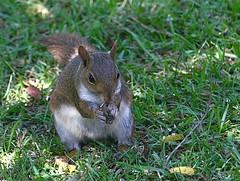 Through The Window (Aliparis) Tags: nature grass canon squirrel sunflowerseeds naturallightphotography canon7d