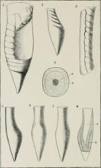 Anglų lietuvių žodynas. Žodis cephalopodan reiškia cefalopodanas lietuviškai.