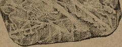 Anglų lietuvių žodynas. Žodis ambrit reiškia <li>ambrit</li> lietuviškai.