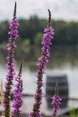 Le canal d'Orlans vers la Loire (Pierre ESTEFFE Photo d'Art) Tags: france fleur canal eau ciel nuage loire navigation tourisme fleuve orlans fluvial loisir bteau combleux loiret45