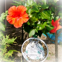 """""""To a friend's house the road is never long"""" (Trinimusic2008 - stay blessed) Tags: ontario canada green nature leaves sign thanks petals friendship august foliage hibiscus gratitude sandbox brampton welcoming 2014 iloveflowers joysgarden trinimusic2008 judymeikle"""