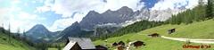 IMG_0370 - IMG_0375 (Pfluegl) Tags: wallpaper panorama berg view christian alpen dachstein steiermark hintergrund pfluegl ramsau hugin hchster kalkalpen perner sdwand viea dachsteinsdwand bersterreich pflgl neustattalm