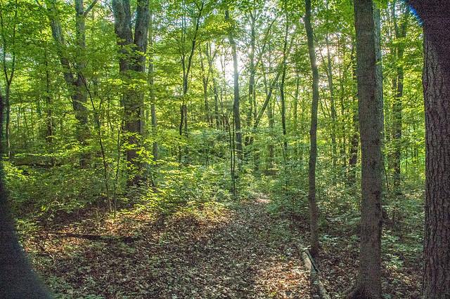 Tangeman Woods - July 17, 2014