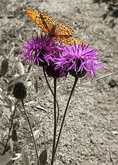 Butterfly (nikita_novozhilov) Tags: pink flower nature butterfly insect samsung aviary