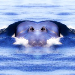 s e a t a c e a n i s t i c (epiclectic) Tags: reflection animal photoshop mirror design graphic wildlife humor perspective manipulation images symmetry reflect symmetrical mutant twisted enhancement epiclecticcom epiflection epiflectionbyepiclecticcom