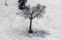 Lonely (sachinsawhney) Tags: snow tree lonely melt kashmirindia 24105lf4 woodscanon eos60d sachinsawhneyflickr