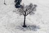Lonely (sachinsawhney) Tags: snow tree lonely melt kashmirindia 24105lf4 woodscanon eos60d sachinsawhneyflickr
