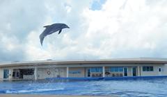 Marineland,St Augustine beach (norvegia2005sara) Tags: trip travel sea usa beach st america florida dolphin atlantic fl mammals augustine atlanticocean marineland 2014 staugustinebeach sunshinestate norvegiasara usa2014