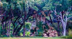 IMG_2181-Edit.jpg (Linda S. Montgomery) Tags: trees palms southcarolina kiawahisland islandvegetation