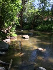 Hawksbury Creek third sample site[2]
