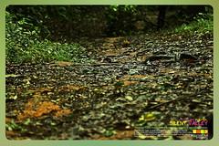 Silent Valley---------------19 (Binoy Marickal) Tags: india green tourism nature water rain kerala mala palakkad evergreenforest treaking silentvalleynationalpark nilgirihills mannarkkad mukkali kuzhur indiabinoymarickal