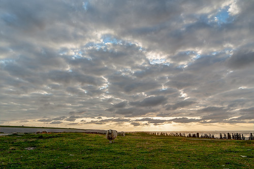 """Sheep clouds • <a style=""""font-size:0.8em;"""" href=""""http://www.flickr.com/photos/56274740@N08/14857058143/"""" target=""""_blank"""">View on Flickr</a>"""