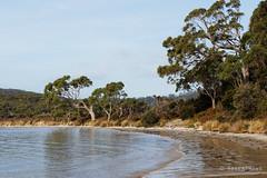 20140805-32-Great Taylor Bay.jpg (Roger T Wong) Tags: sea beach water trek island coast nationalpark walk australia hike tasmania np brunyisland bushwalk tramp 2014 canonef24105mmf4lisusm canon24105 southbruny canoneos6d southbrunynationalpark rogertwong greattaylorbay
