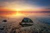 Sunduntergang (dubdream) Tags: ocean longexposure sunset sea sky cloud sun seascape water rock nikon balticsea fehmarn schleswigholstein fehmarnsund d800 colorimage wetreflection grosenbrode dubdream