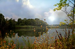 Good Day September (floralgal) Tags: trees lake seascape nature water landscape pond brush september autumncolors latesummer ryenewyork westchestercountynewyork
