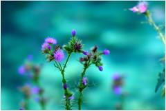 parco del grassano (Serino Antonello) Tags: panorama sun verde green nature water del river italia fiume natura sole acqua paesaggi anon paesaggio grassano totalphotoshop 350dparcoparco