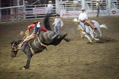Bronco, Omak Stampede (AdamCohn) Tags: adam rodeo complex wildfires omakstampede adamcohn wwwadamcohncom cohnwwwadamcohncomomakwaomak stampedesuicide racecarlton